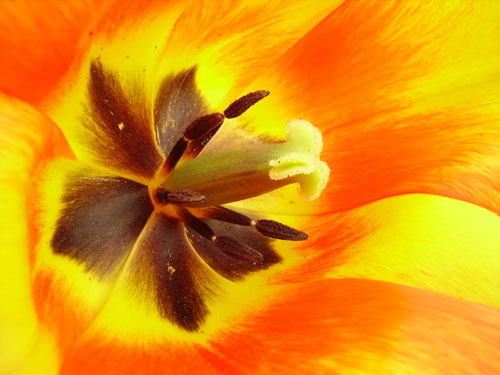 Flor : alegría y colorido